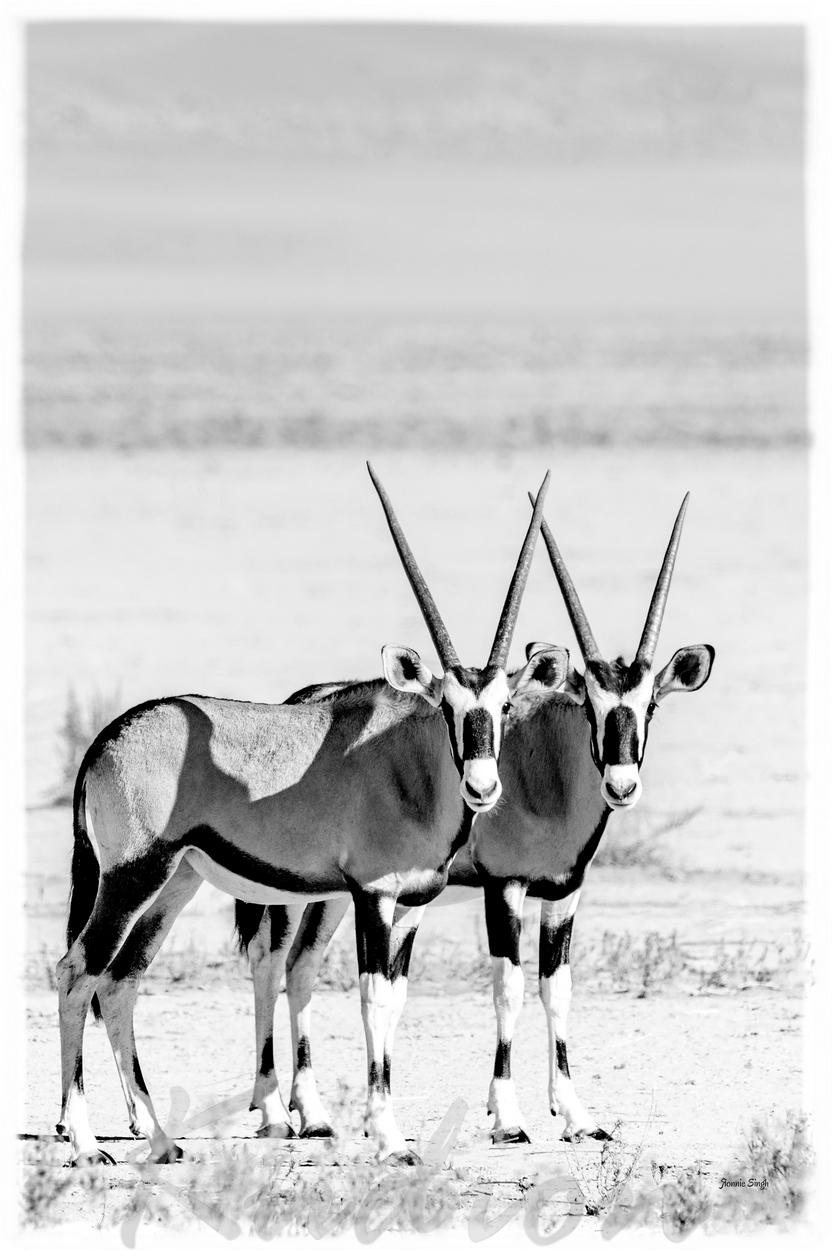 Die Oryx Brüder - Monochrom Edition