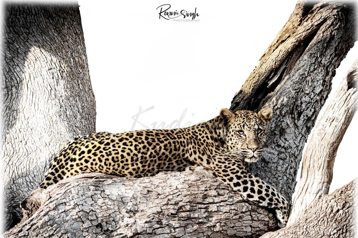 Leoparden Paradies