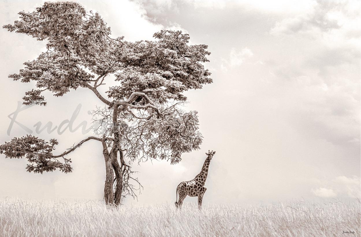 Der Baum und seine Giraffe - Sepia