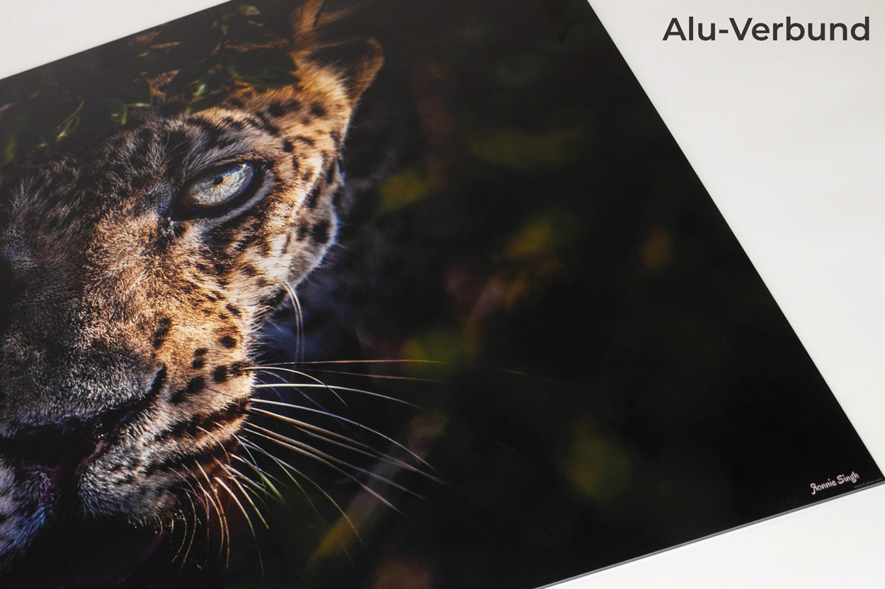 Im Auge des Leoparden