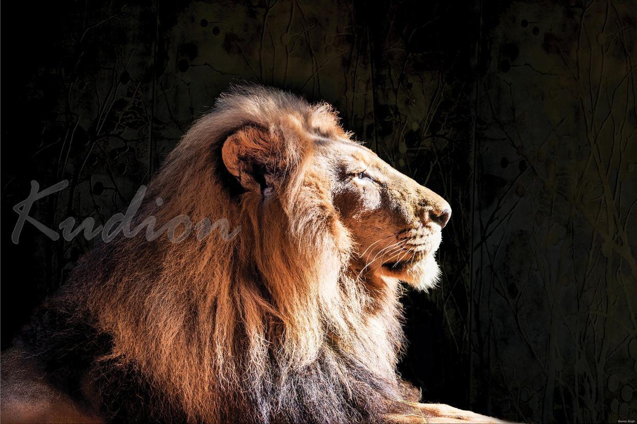 Der Stolz des Löwen